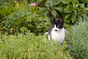 kitten sitting in rockrey