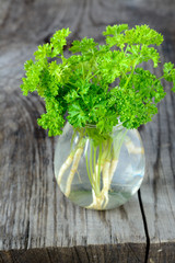 Green curly parsley in a jar with water