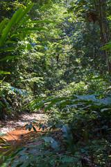 Borneo rainforest