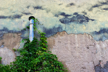 Pipe on the wall with wild plants