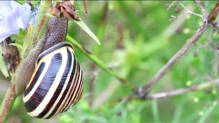 A colorful snail moves up a stem