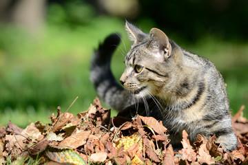 Katze mit Blätter