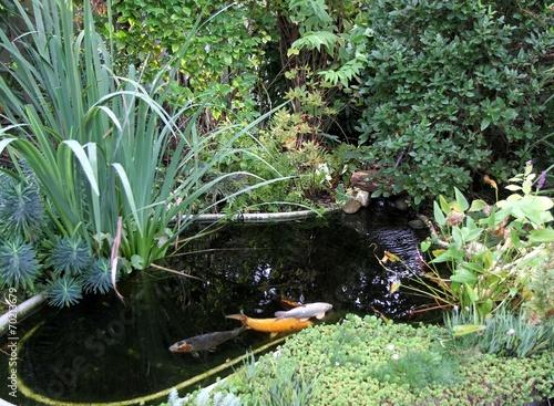 bassin de jardin et carpes koï - 70213679