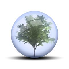 Arbre dans une bulle : robinier