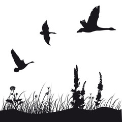 ducks silhouette
