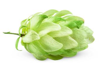 hops green