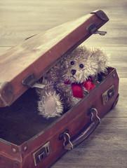 Teddy Bear In Suitcase