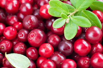 organic cowberry