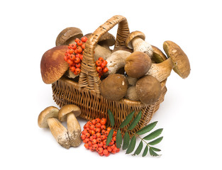 Basket with mushrooms on a white background