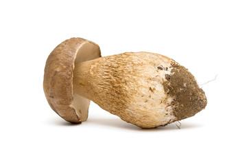 mushroom closeup on white background