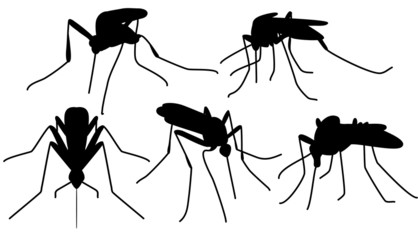biting mosquitoes