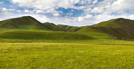 green savanna mountain in Tibet - Qinghai province, China