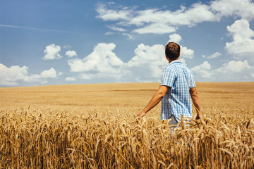Man walking through wheat field