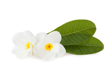Flowers Plumeria isolated on a white background