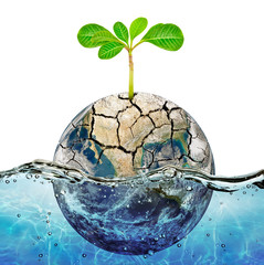 Lonely plant in the parched earth submerged in the ocean