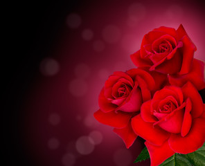 three red roses are on black background