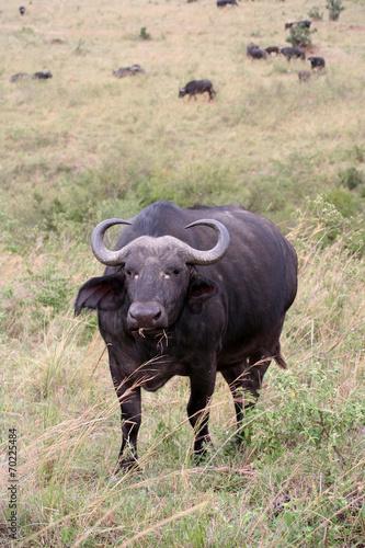 Aluminium Buffel Buffle de face