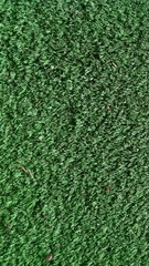 Background Green Carpet