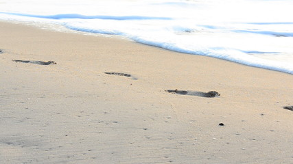 Footprints on the sand of a tropical beach , HD