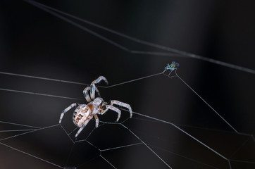 Spider and fly on dark background