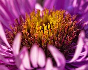 Flower in sun beams