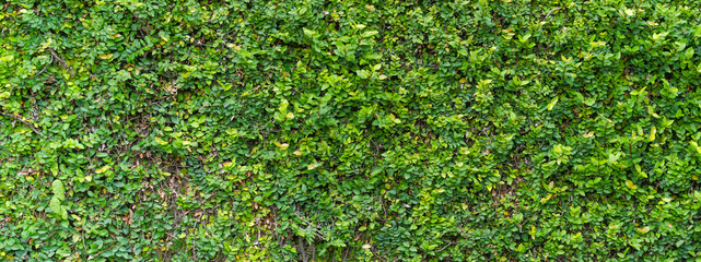 Green Bush Seamless Tileable Texture