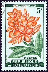 Plumeria rubra plant (Ivory Coast 1961)