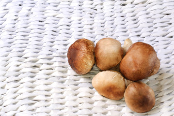 CEPS on the white paper wattled background