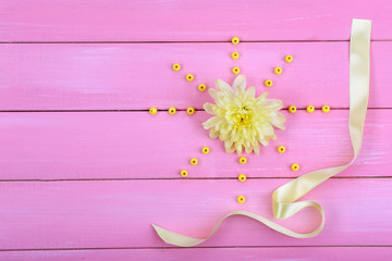 beautiful chrysanthemum flower on pink wooden background