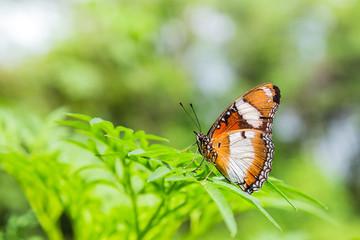 butterfly on green leaf in garden