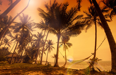 Tropical paradise: sunset at the seaside - dark silhouettes of p