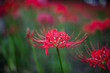 canvas print picture - Pink Blume