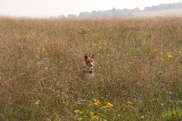 Dog among wild flowers
