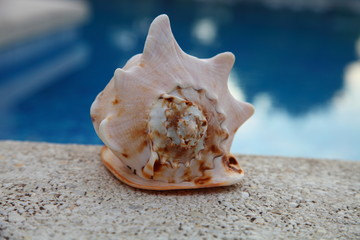 Shell near the pool