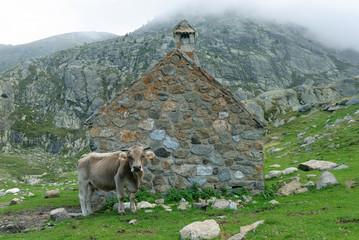 vaca y casa