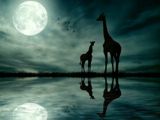 Silhouettes of two giraffes against African moonlight skyline