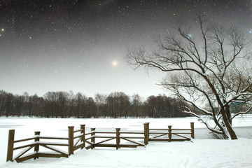 winter night in the park.