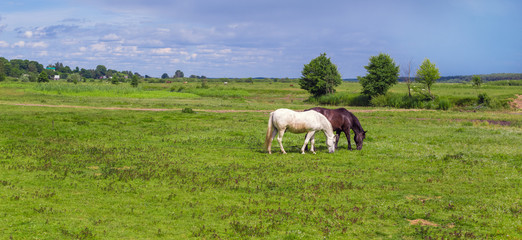 The two tied horses in the pasture