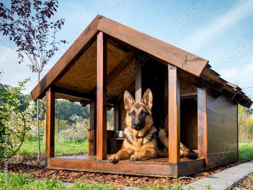 Poster German shepherd in its kennel