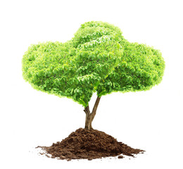 tree and soil