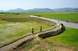 Farmer pump water to vast rice field poster