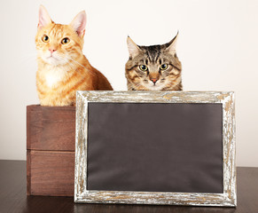 Two cats in wooden box and blackboard on table isolated on