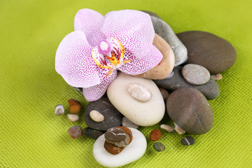 Composition with orchid flower and stones in water