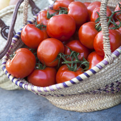 Fresh tomatoes from farm in a basket