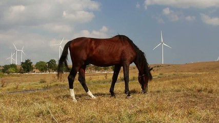 Grazing horse with turbines in the background