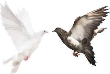 isolated black and white pigeons illustration