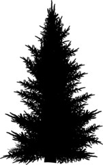 single black fir silhouette isolated on white