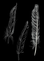 three white feathers sketches on dark background