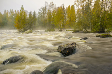 Rapid in autumn