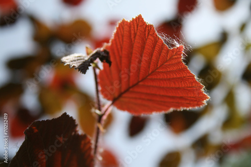 canvas print picture herbstlaub